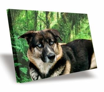 foto lienzo, canvas,impresión digital, decoración, cuadros de animales, cuadros decorativos,cuadros personalizados, impresión de fotos,mascota